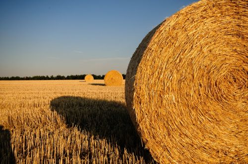 straw bales stubble summer