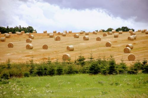 straw bales harvest agriculture