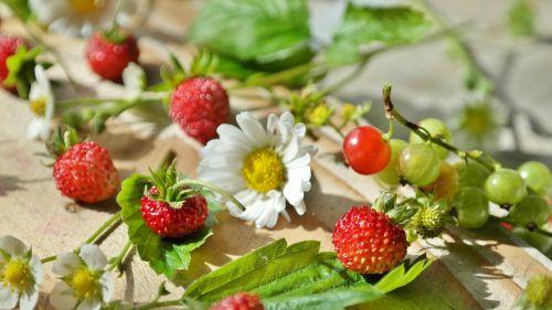 strawberries wild strawberries daisy