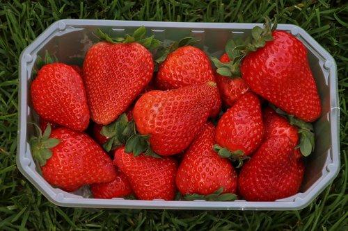 strawberries  red  basket
