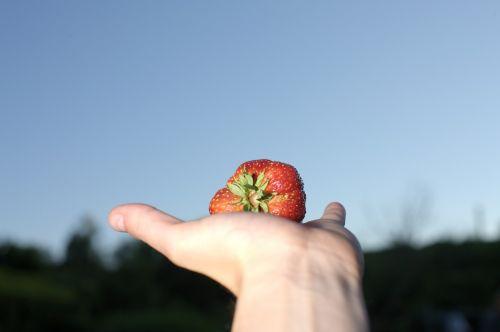 strawberry large eat