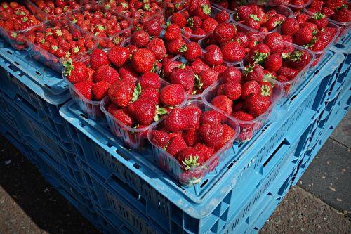 strawberry fruit fresh fruit