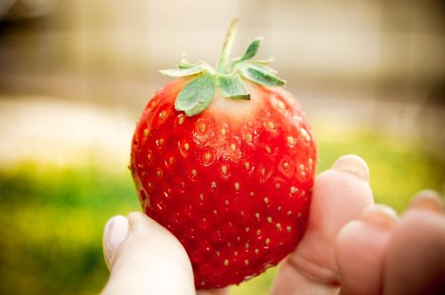 strawberry nature fruit