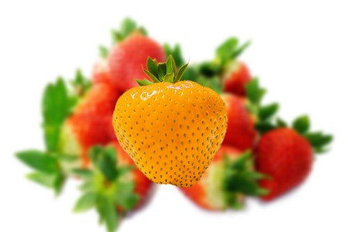 strawberry  distinction  distinguish