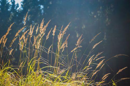 straws grass background