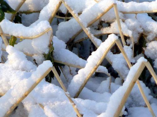 straws winter snow