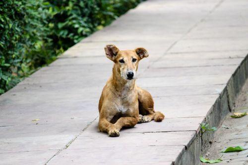 stray dog footpath