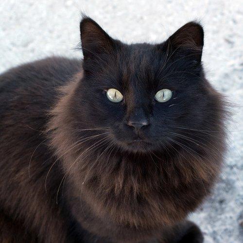stray  street cat  cat