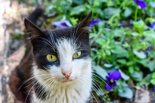 stray  cat  israel