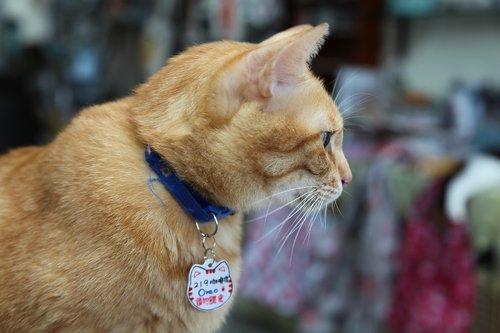 stray  homeless  cats