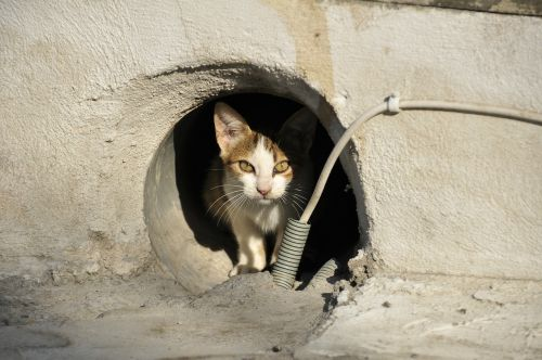 stray cat cat greece animal