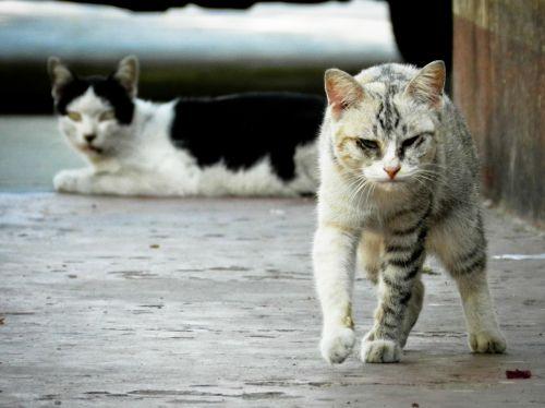 stray cat cat feline