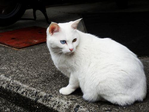stray cat white cat cat