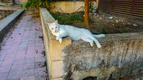 Stray Cat In Greece