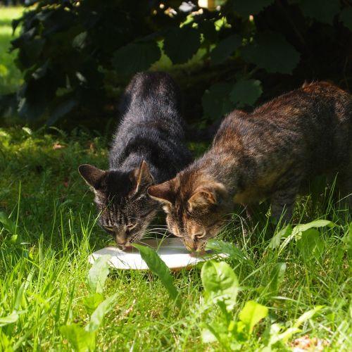 stray cats cats milk