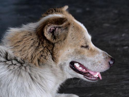 stray dog head dirty