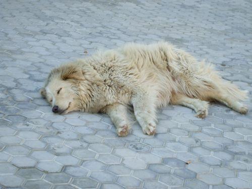stray dog sleeping dog