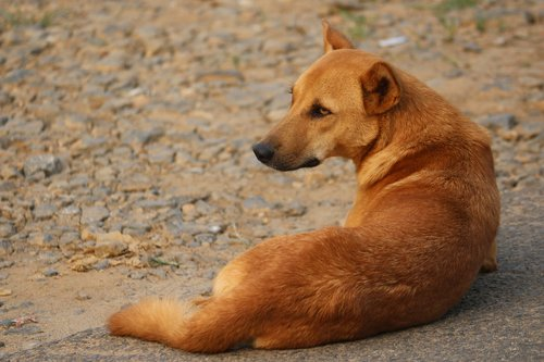 stray dog  dog  animal