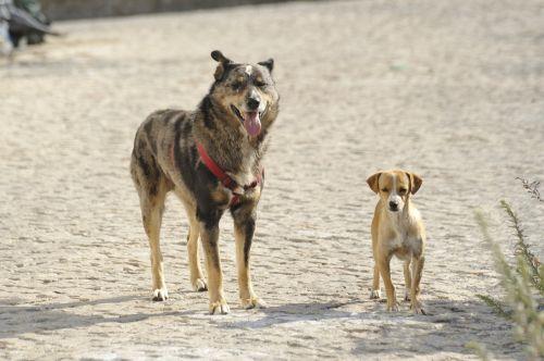 strays dogs size comparison