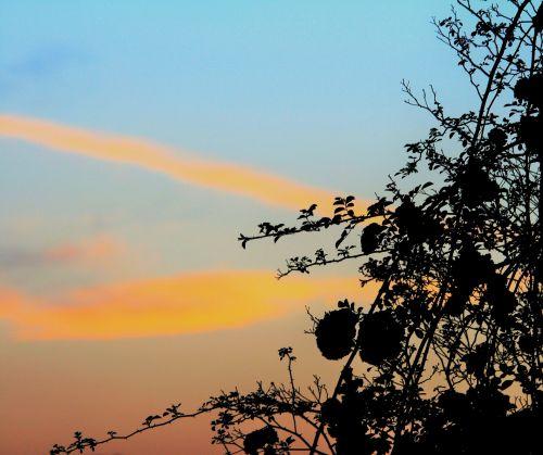 Streaks At Sunset