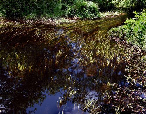 stream brook river