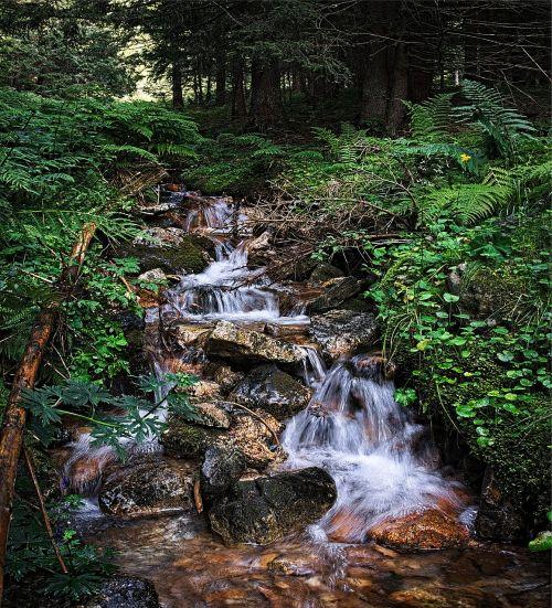 stream tatry water