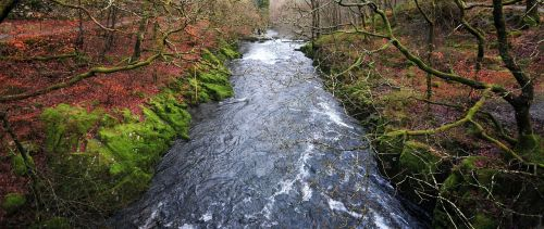 stream forest water