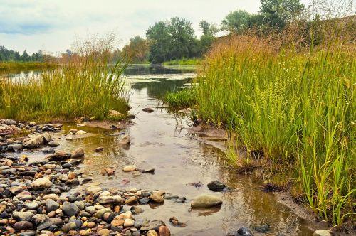 stream summer grass