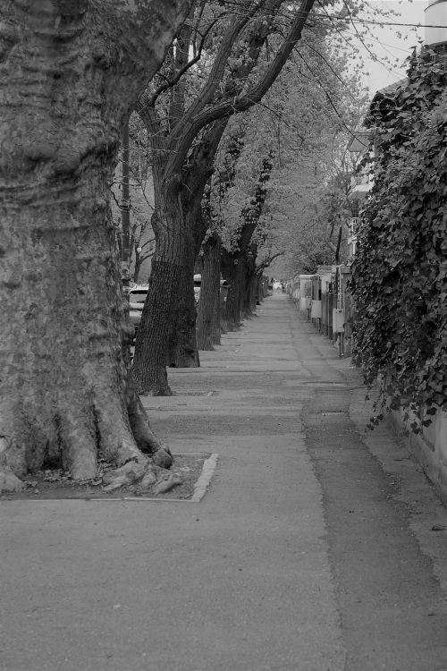 street trees solitude