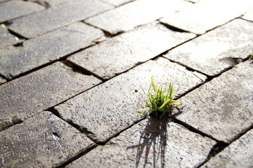 street grass sidewalk