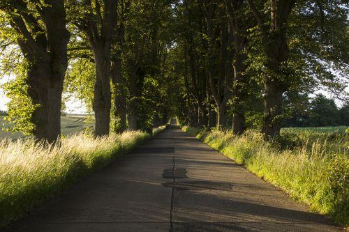 street avenue tree road