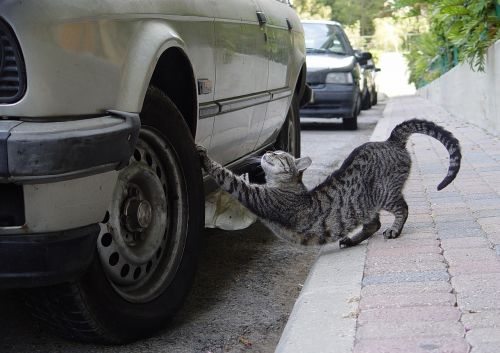 stretch cat tire