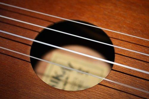 strings  ukulele  instrument