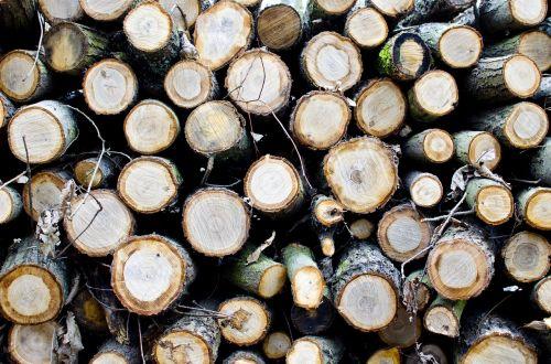 strom stromy řez