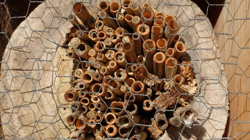 structure tree grates wild bees