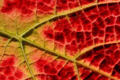 structure autumn vine