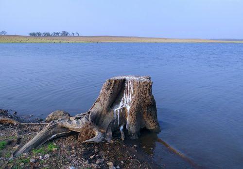stub tree stump