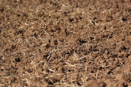 stubble harvested dirt