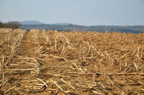 stubble glean field