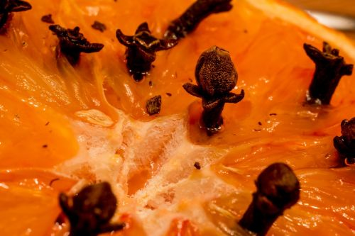 studded orange clove syzygium aromaticum