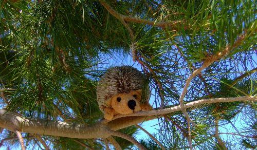 stuffed animal plush toy hedgehog