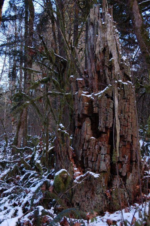 stump wood forest