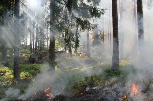 styggkärret reserve burning