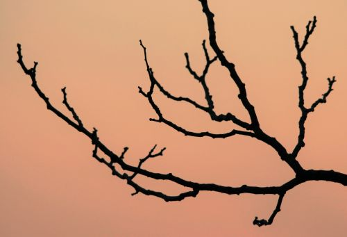 Stylish Branches At Sunset