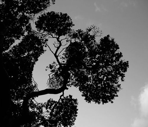Stylish Tree Branches In Silhouette