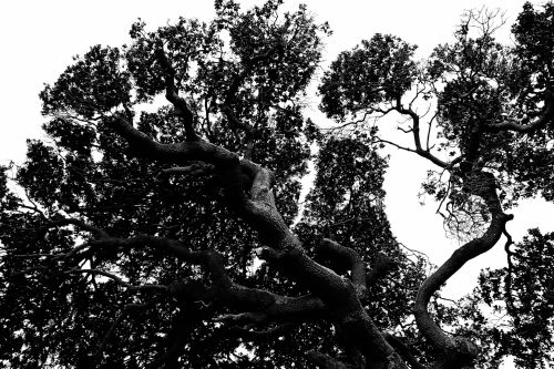 Stylish Tree In Black And White