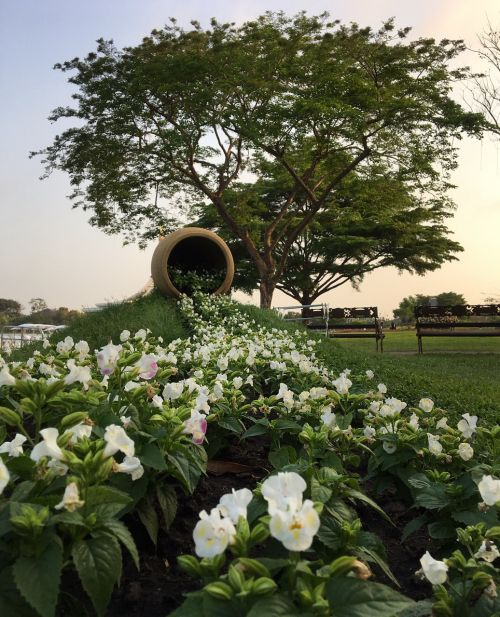 suan luang parks flowers