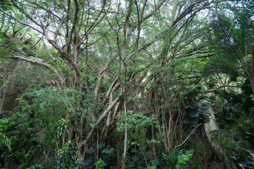 augmenija, medžiai, augalai, delnus, subtropinis, subtropinė augmenija
