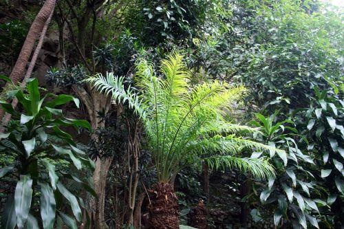 augalai, augmenija, fernlike, tamsintas, subtropinis, subtropinė augmenija