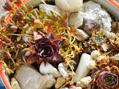 succulent pot stones
